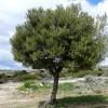 Zeytin ağaçları koruma kanunu